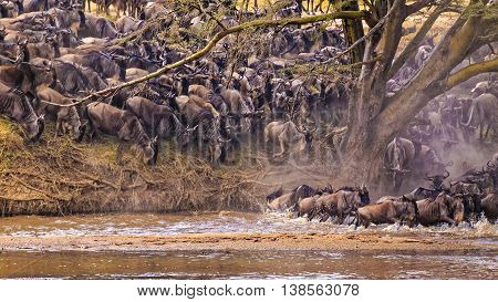 The Spectacular Wildebeest Migration Sighting in Serengeti