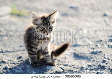 Little kitten sit on asphalt selective focus