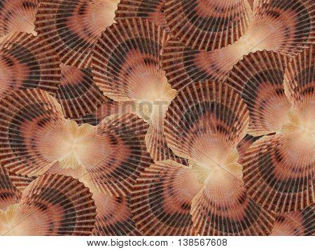 Conchiglie di mare, ostrica, bivalva, può contenere una perla