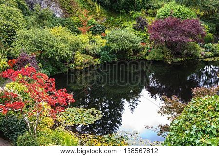 In pond, overgrown with lilies, reflected trees and sky.