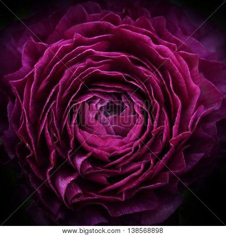 purple flower background.