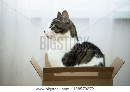 young domestic cat sitting in the postal box