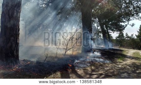 Start a wildfire in a dry pine forest