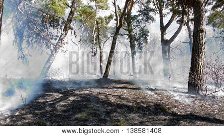Disaster with fire in the forest. There is a fire in-field