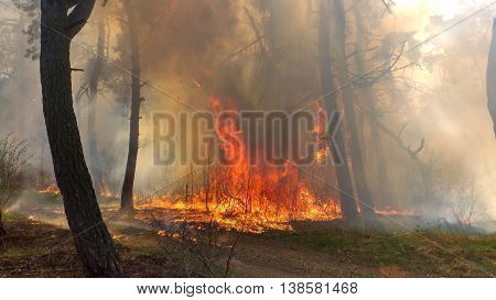 Beginning of forest fire. There is a fire in-field