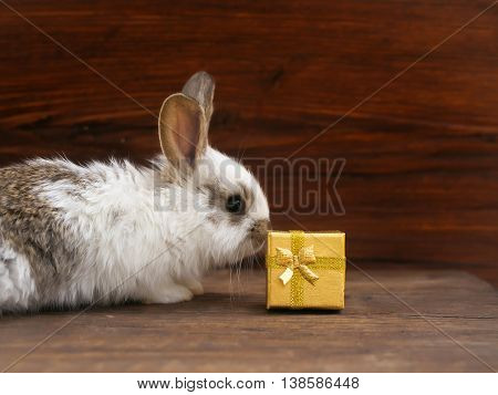 Funny little rabbit and gift box with golden wrapper ribbon bow on wooden background