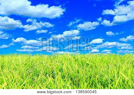 meadow with green grass and cloudy sky in the summer