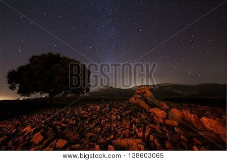 Lonely tree and a dolmen under the stars