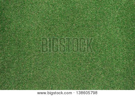 Green lush grass texture: nature environment and gardening concept