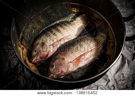 Fresh Tilapia Or Nile Tilapia In Pot