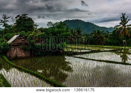 A glassy rice field and wooden house in rural Bali