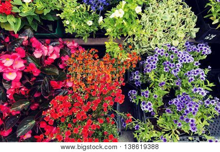 gardening, flowers and sale concept - close up of flower seedlings at street market