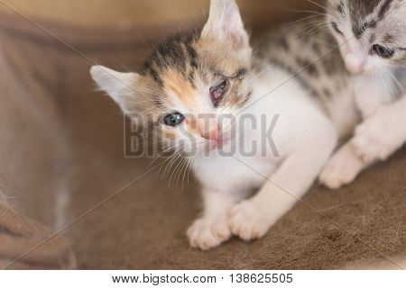 sick little kitten with one eye blind, closeup image
