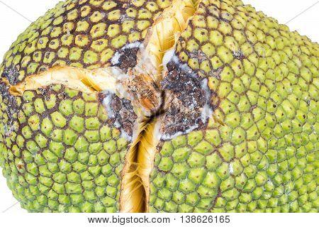 Close Up Jackfruit With Crack Peel