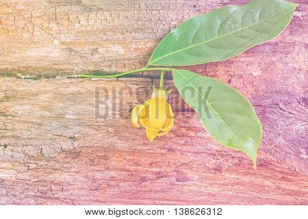 Ylang-ylang Flower With Leaf