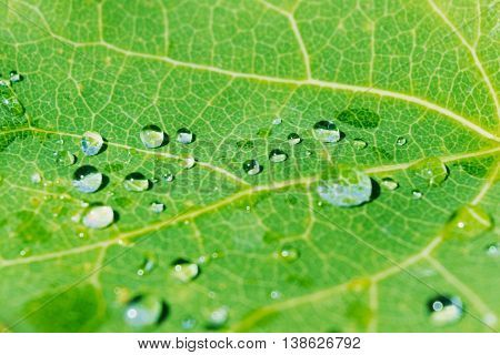 Morning dew on green leaf background. Green leaf with rain drops. Water drops on green leaf texture.