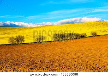 Beautiful Spring Plowed Field And Green Meadow And Tree.