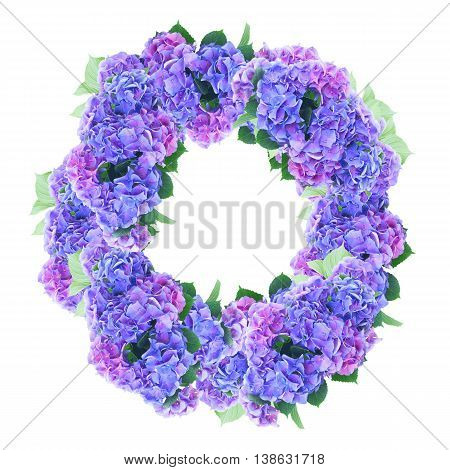 blue and violet hortensia flowers wreath isolated on white background
