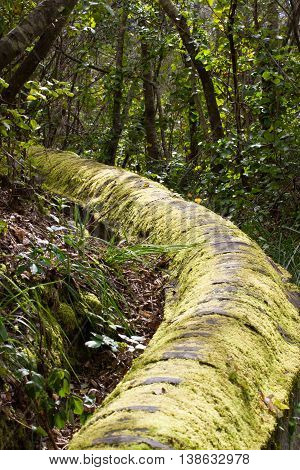 Ancient cement tube in the forest near the town of Los Realejos, Tenerife, Spain