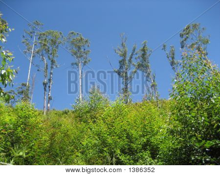 Vibrant Green Trees With Blue Sky