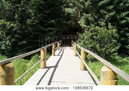Wooden bridge in green forest across the river grassy