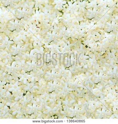 beautiful white flower background.