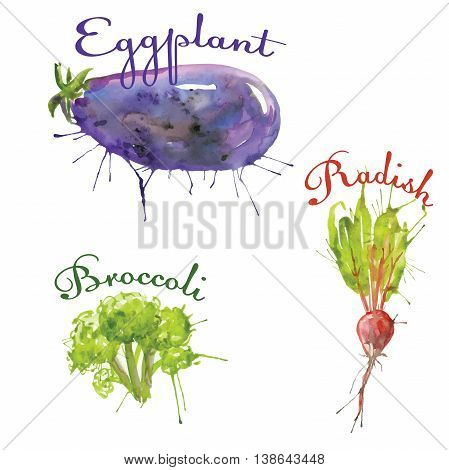 watercolor set of vegetables eggplant, radish, broccoli