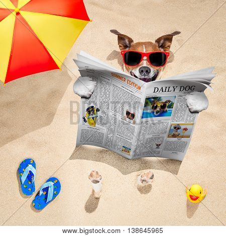 Dog At The Beach Reads Newspaper