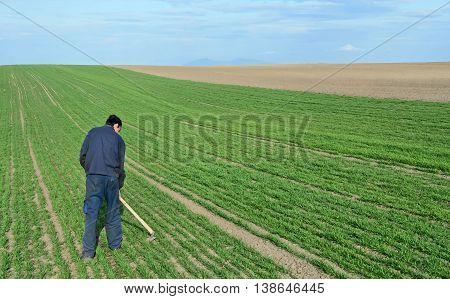 Lonely farmer working on his wheat farmland
