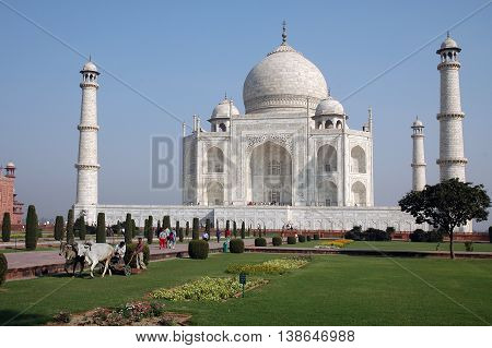Agra, Utta Pradesh, India - march 07, 2006: Gardeners with a yoke of cows, mowing the gardens of the Taj Mahal
