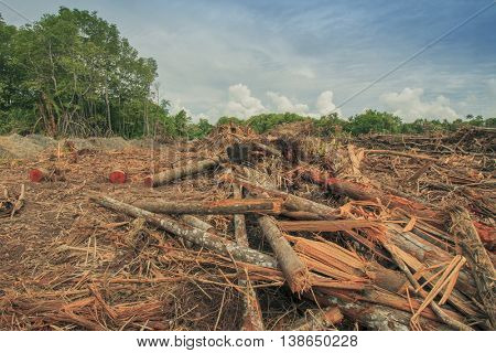 Deforestation environmental problem: Borneo rainforest destroyed to make way for oil palm plantations.