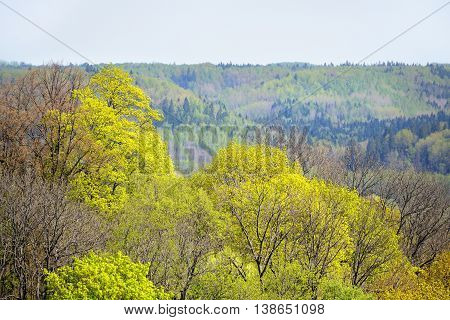 areal view on Gauja river valley in spring in Sigulda Latvia
