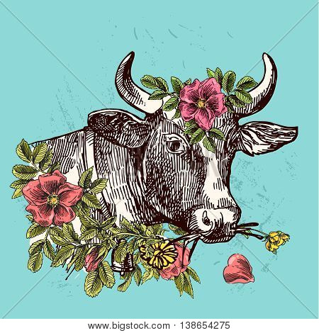 Beautiful hand drawn illustration head of cow. Sketch style. Use for poster, tattoo, print t-shirt.