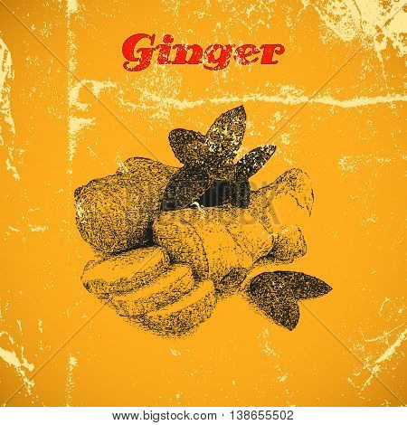 Hand drawn vintage ginger isolated on yellow distressed grunge background.