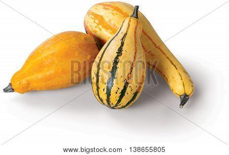 Yellow Squash on the white background vegetable autumn