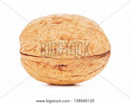 single walnut in a shell, isolated on white background