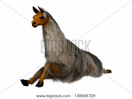 3D rendering of a llama or Lama glama a domesticated South American camelid isolated on white background