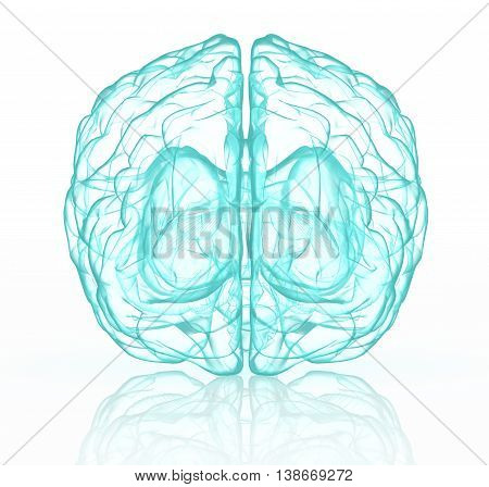 3D Illustration Of X-ray Human Brain In Blue.