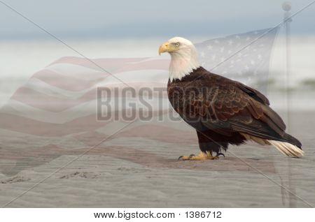 Bewachung von Liberty