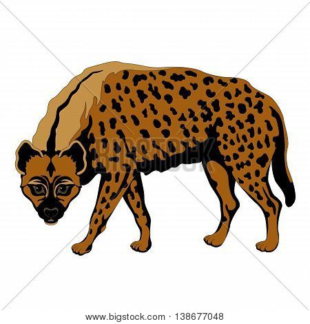 adult hyena spotted vector illustration color black