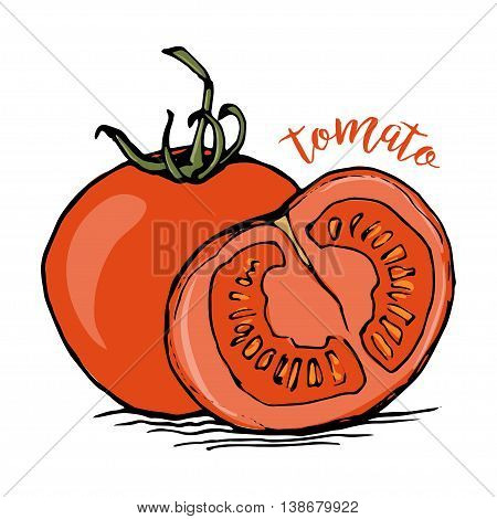 Whole and half tomato sketch style vector illustration isolated on white background. Appetizing ripe red tomatoes