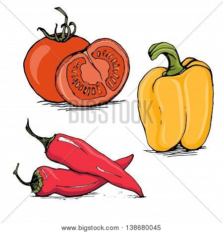 Whole and half tomato, yellow bell pepper and red hot chilli sketch style vector illustration isolated on white background