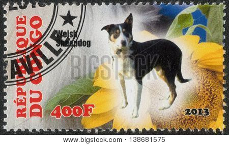 CONGO - CIRCA  2013: A post stamp printed in Congo shows a series of images welsh sheepdog