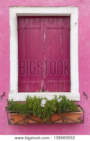 Picturesque old window with dark pink shutters on pink wall (Burano island Venice Italy)