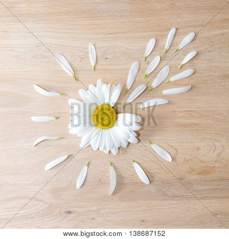 Daisy flower head with some petals torn off on wooden background. Nature fertilization and medicine concept