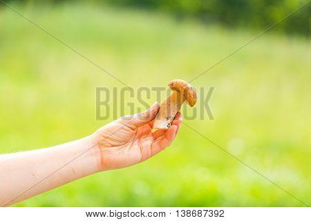 Woman Hand Holding Eatable Mushroom