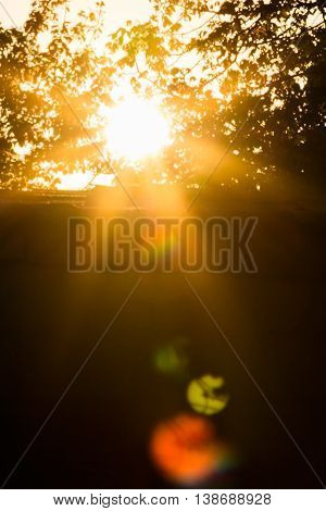 Silhouettes of leaves the sun's rays and multicolored patches of sunlight at sunset backlight