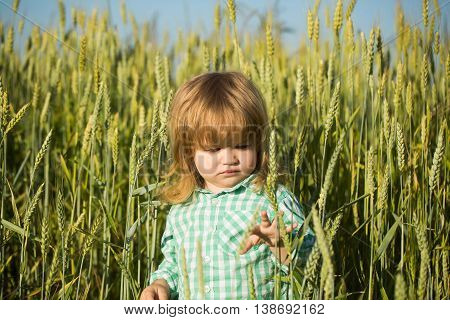 Small Boy In Green Field Of Spikelets Grass