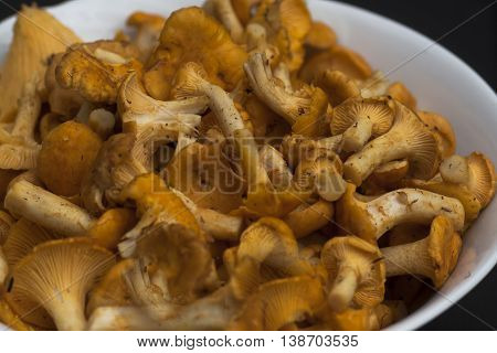 some freshly picked chanterelles waiting to be fried