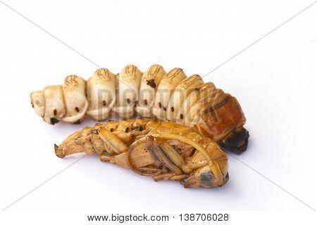 Long horn beetle larva isolate on white background.